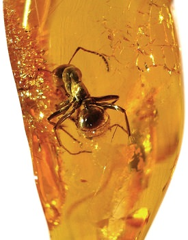 Baltic amber with ant inclusion