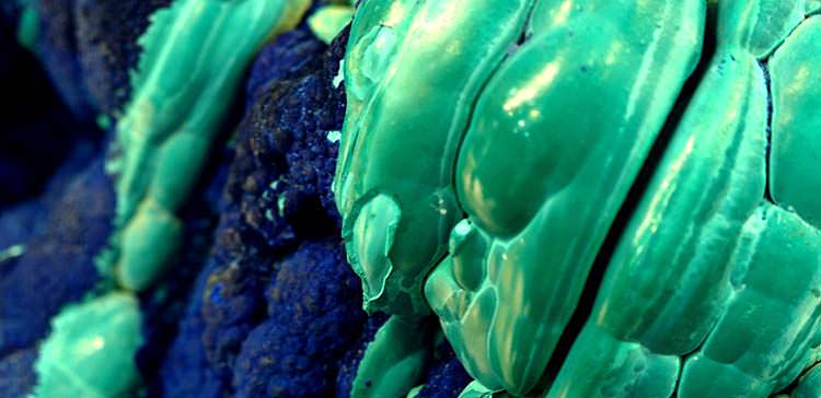 Azurite (blue) and botryoidal malachite (green)