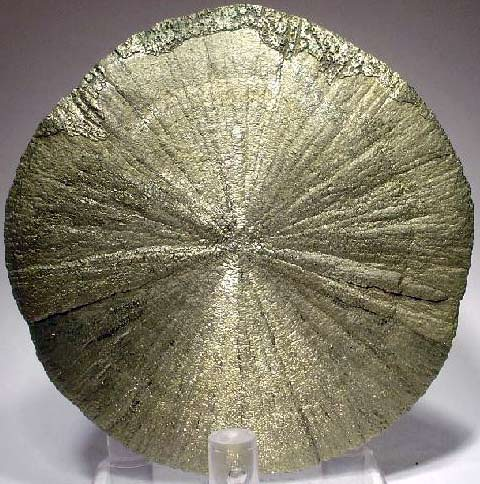 A pyrite disc or 'pyrite dollar'. They usually form between shale or clay layers